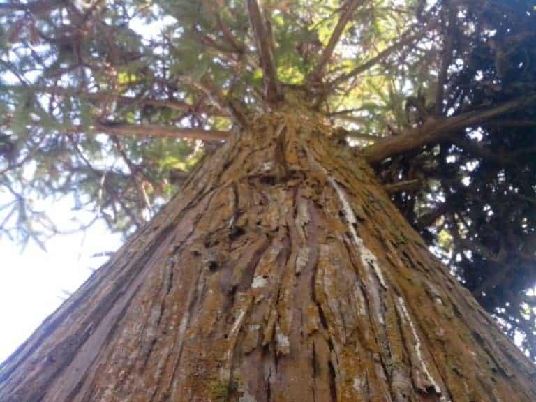 Tìm hiểu về gỗ ngọc am, có mấy loại, có tốt không