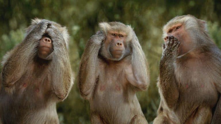 Tử vi tuổi Thân khỉ, Tìm hiểu chi tiết về tính cách, sự nghiệp, tình yêu
