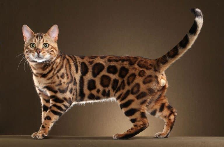 Hiểu được vận mệnh tuổi Mão mèo, tương hợp và xung khắc qua Tử Vi